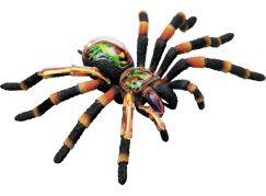 4D Anatomický model -  Pavouk Tarantule