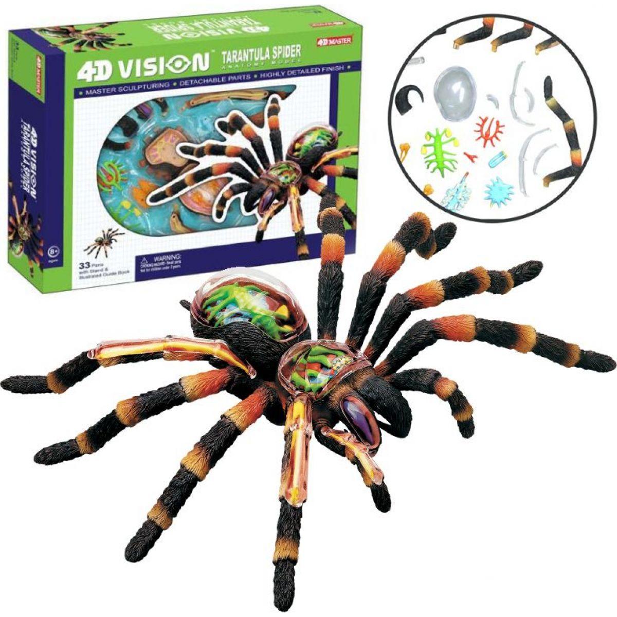 4D Anatomický model -  Pavouk Tarantule #2