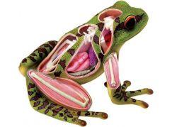 4D Anatomický model -  Žába