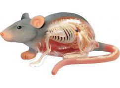 4D Anatomický model - Krysa