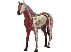 4D Anatomický model - Kůň