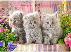 Castorland Puzzle 300 dílků Tři šedivá koťátka