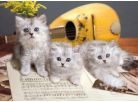 Clementoni Puzzle Koťata 1000d 2