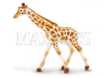 Collecta Žirafa africká mládě