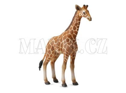 Collecta Žirafa mládě