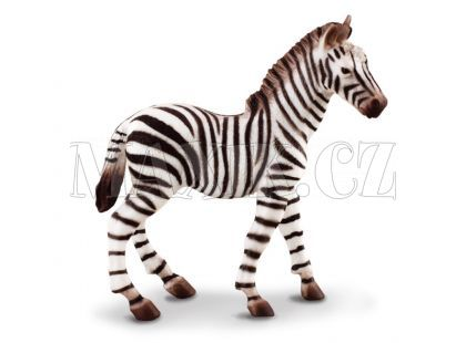 Collecta Zebra hříbě
