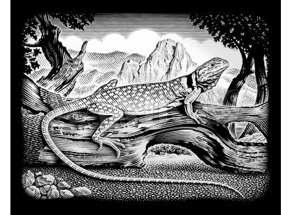 Creatoys Reeves Škrábací obrázek stříbrný 20x25cm - Ještěrka