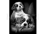 Creatoys Reeves Škrábací obrázek stříbrný 20x25cm - Psi