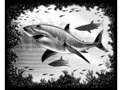 Creatoys Reeves Škrábací obrázek stříbrný 20x25cm - Žralok