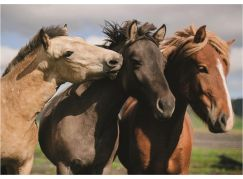 Dino barevní koně 300 XL puzzle