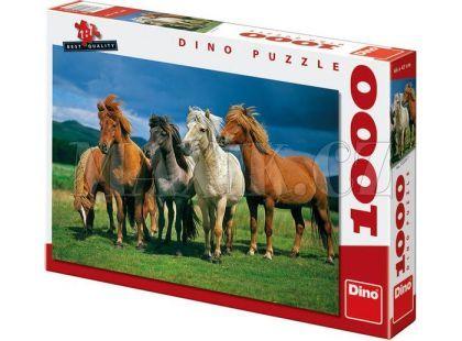 Dino Puzzle Islandští koně 1000dílků