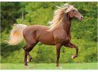 Dino Puzzle Kůň Zlatohřívák 300XL dílků 2