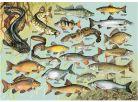 Dino Puzzle Ryby 1000dílků 2