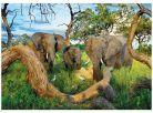 Dino Puzzle Sloni z Botswany 1000dílků 2