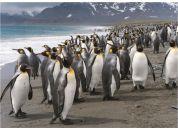 Dino tučňáci 1000 puzzle
