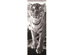 Dino tygr 1000 panoramic puzzle