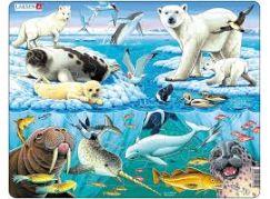 Larsen Puzzle Arktida