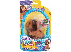 Little Live Pets Mluvící mazlíček II. - Hvězdík