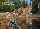 National Geographic 3D Puzzle Tygři 500 dílků 2