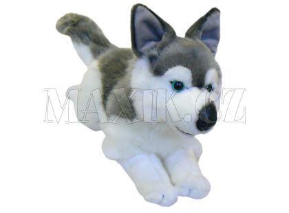 Plyšový pes Husky 34cm