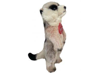 Plyšová surikata 25cm