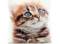 Polštářek kotě 33 x 33 cm
