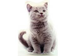 Polštářek šedé kotě 32 x 25 cm