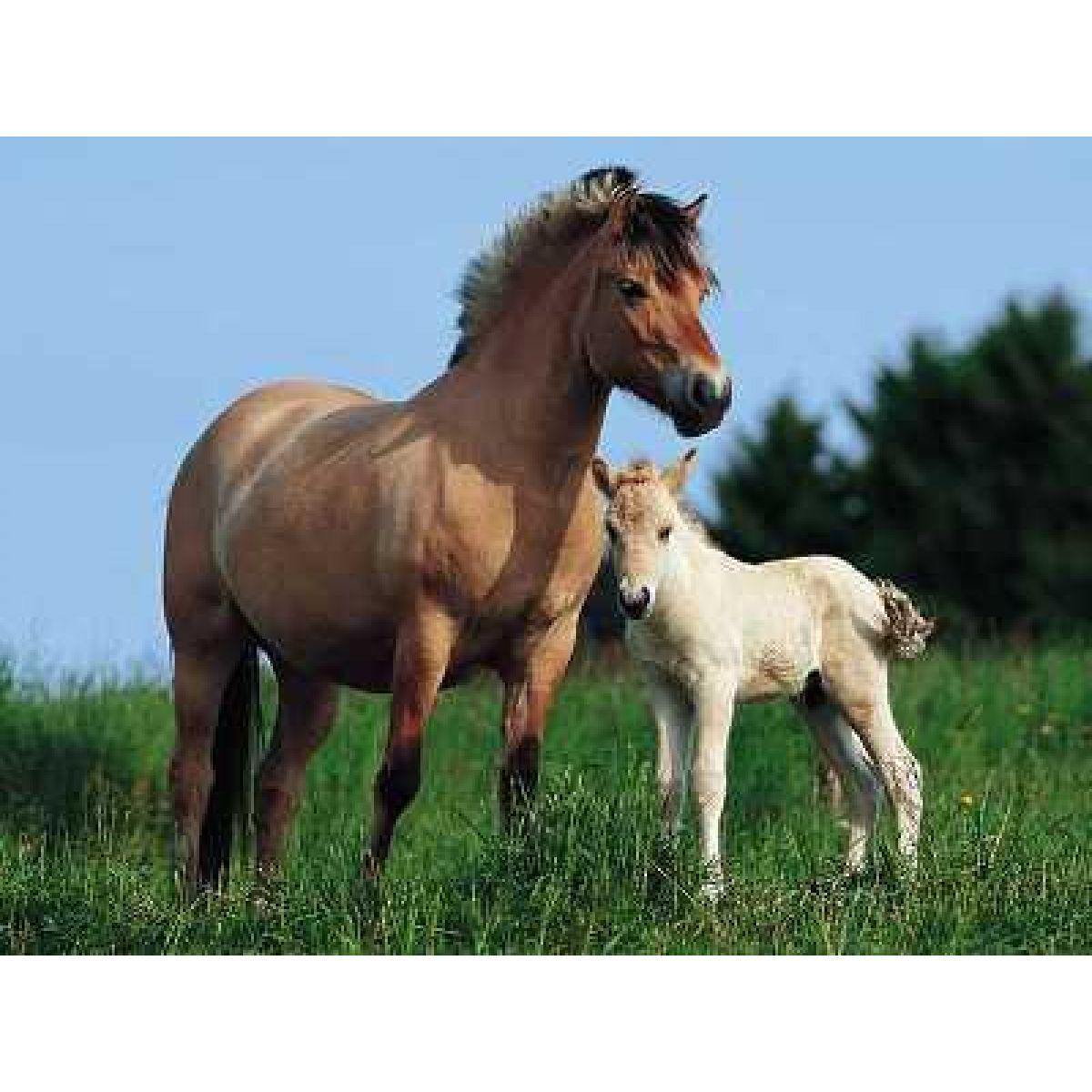 Ravensburger Kůň s hříbětem 500d.
