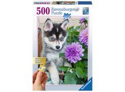 Ravensburger Puzzle Husky 500 dílků