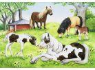 Ravensburger Puzzle Svět koní 2x24 dílků 2