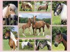 Ravensburger Puzzle XXL Nádherné koně 300 dílků 2