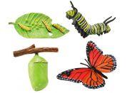 Safari Ltd Životní cyklus Motýl