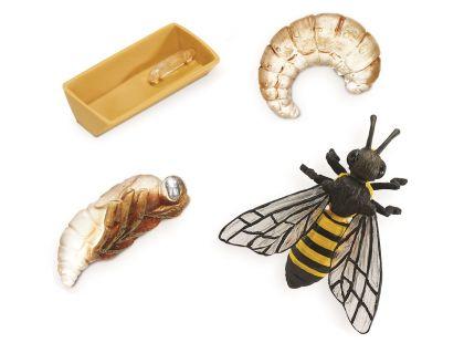 Safari Ltd Životní cyklus Včela