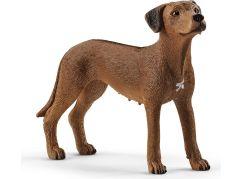Schleich 13895 Zvířátko pes ridgback rhodéský