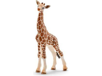 Schleich 14751 Mládě žirafy