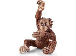 Schleich 14776 Zvířátko orangutan mládě