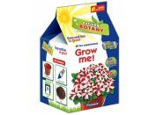 Vypěstuj si květinu Petúnie