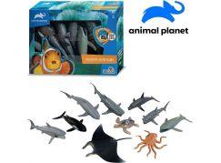 Zvířátka mořská 10 ks mobilní aplikace pro zobrazení zvířátek